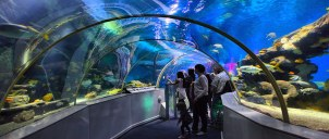 Sealife-sanctuary